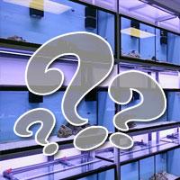 Kérdések a vásárláskor