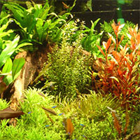 Micronutrients for aquarium plants