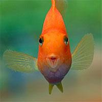 Papag�js�g�r - J�, vagy rossz az akvarisztik�nak?
