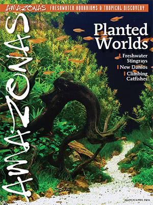 Amazonas Magazine 2016.03-04.