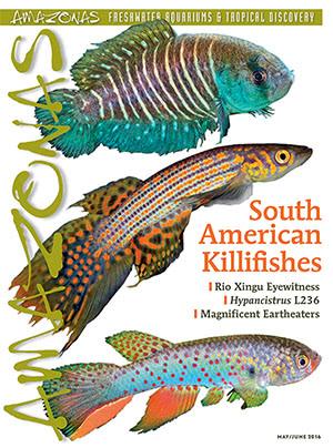 Amazonas Magazine 2016.05-06.