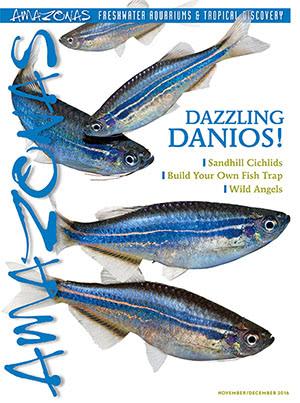 Amazonas Magazine 2016.11-12.