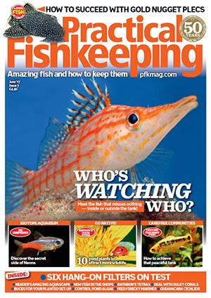 Practical Fishkeeping 2017.06