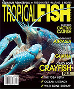 Tropical Fish Hobbyist 2015.08. #713