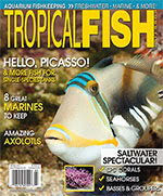 Tropical Fish Hobbyist 2016.03-04. #717