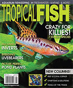 Tropical Fish Hobbyist 2016.05-06. #718