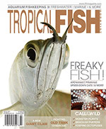 Tropical Fish Hobbyist 2017.03-04. #723
