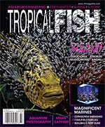 Tropical Fish Hobbyist 2017.07-08. #724